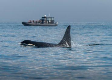 ¿Te gustaría ver orcas en Vancouver?